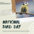 Jan 5th – National Bird Day