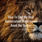 Best Conservation Project – How Do I Know It's Authentic?